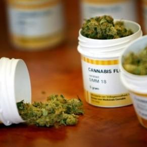 Le cannabis thérapeutique pour redynamiser le territoire - Creuse