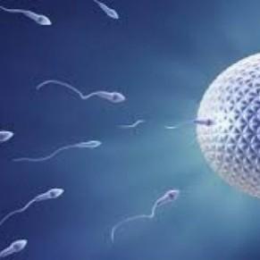 Détecté dans du sperme, le coronavirus est-il une aussi une IST ? - Etude